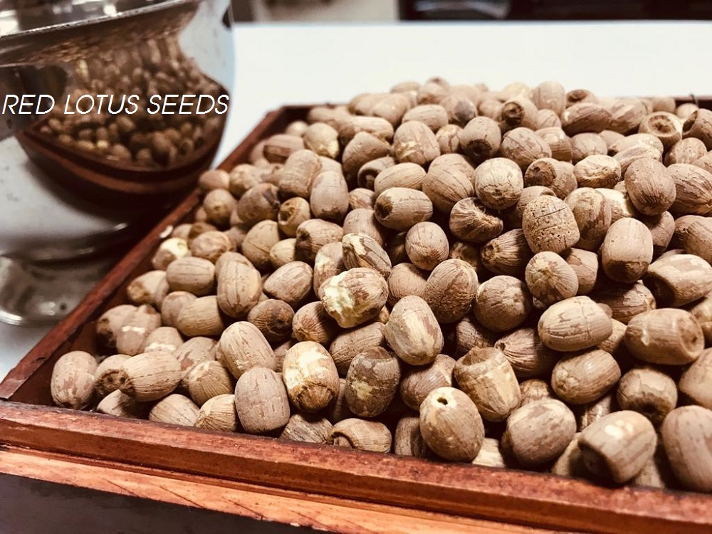 Red Lotus Seeds