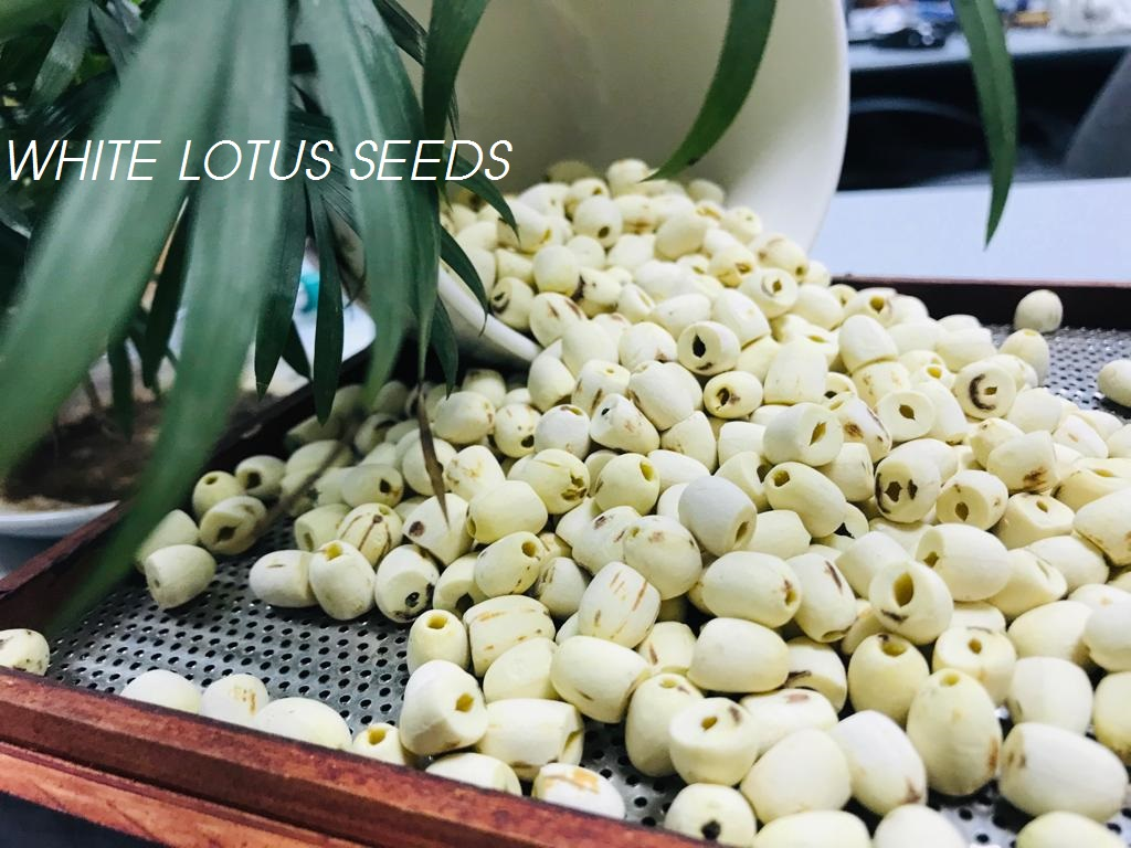 White Lotus Seeds