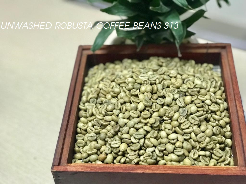 Unwashed Robusta Coffee beans S13