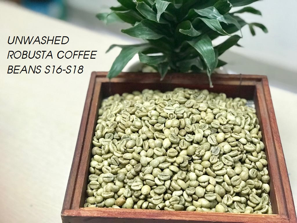 Unwashed Robusta Coffee S16 - S18