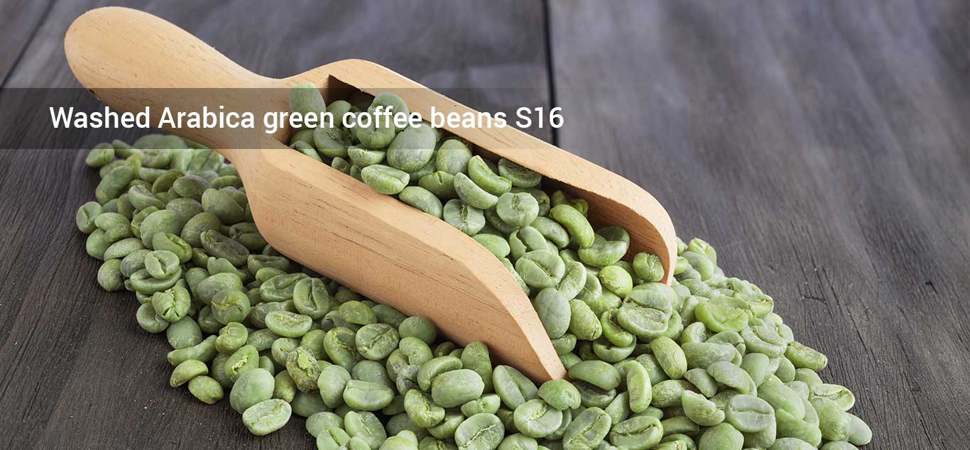 Washed Arabica green coffee beans S16