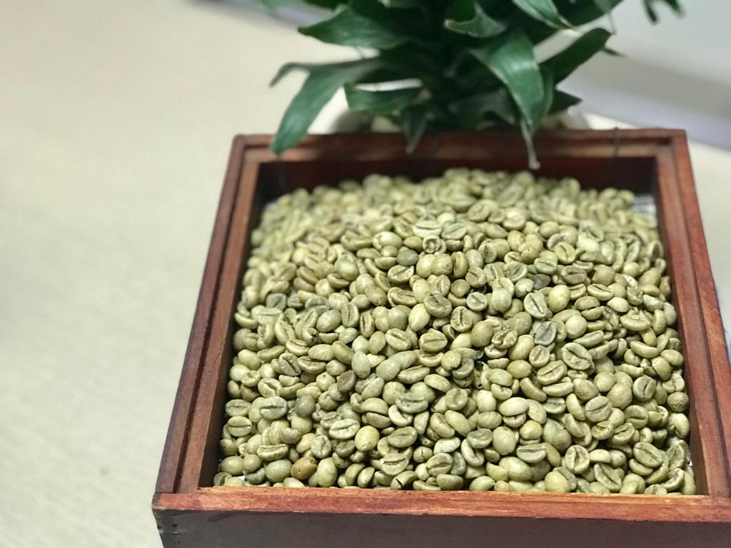 Wet polished robusta green coffee beans S16