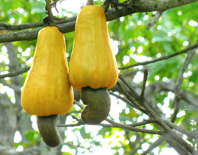 CASHEW  MARKET - GROWTH, TRENDS, AND FORECAST (2020 - 2025)