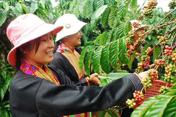 How Vietnam became a coffee giant