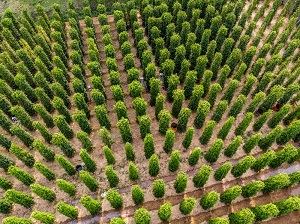 Pepper Cultivated Area In Vietnam And Other Countries Around The World