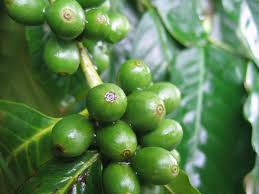 Pulled low coffee prices
