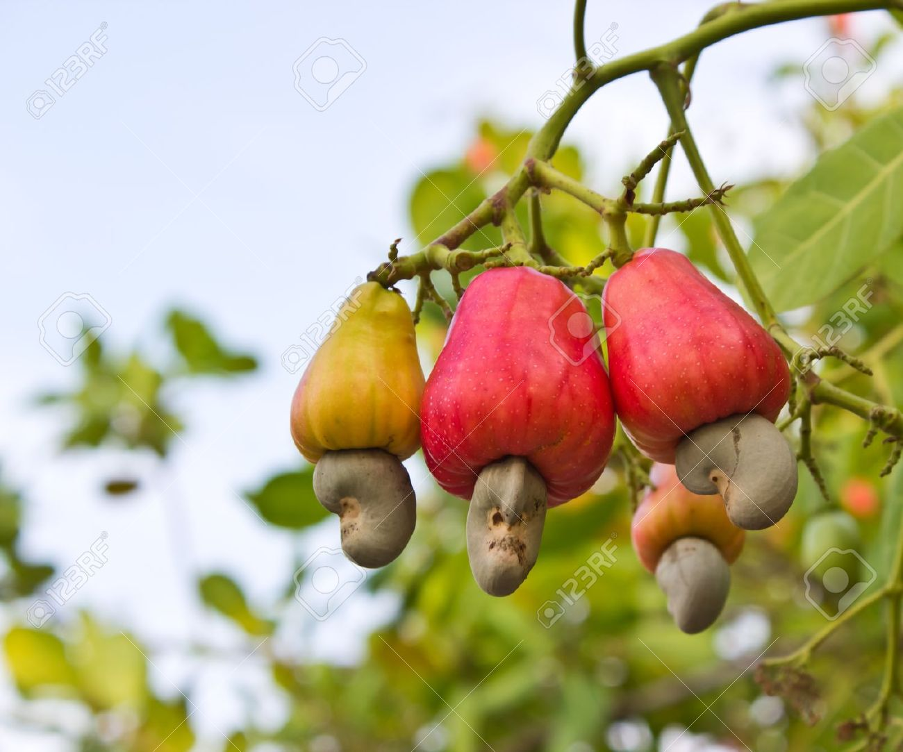 Update on cashew market report April 2021